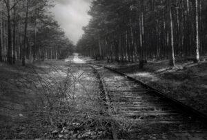 Abandoned railway track in dark pine woods
